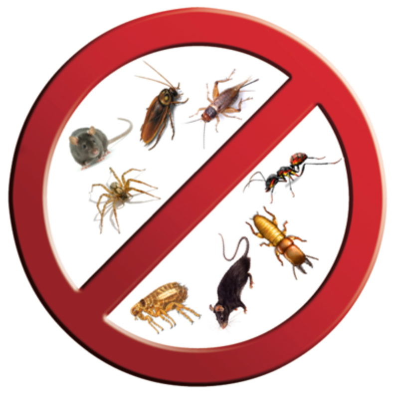 Professional Pest Control Services Versus Do-it-Yourself