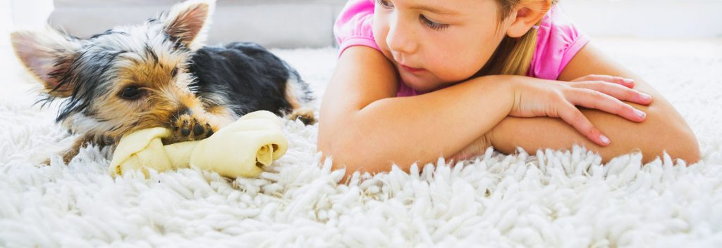 Pet Odor Removal Helensvale